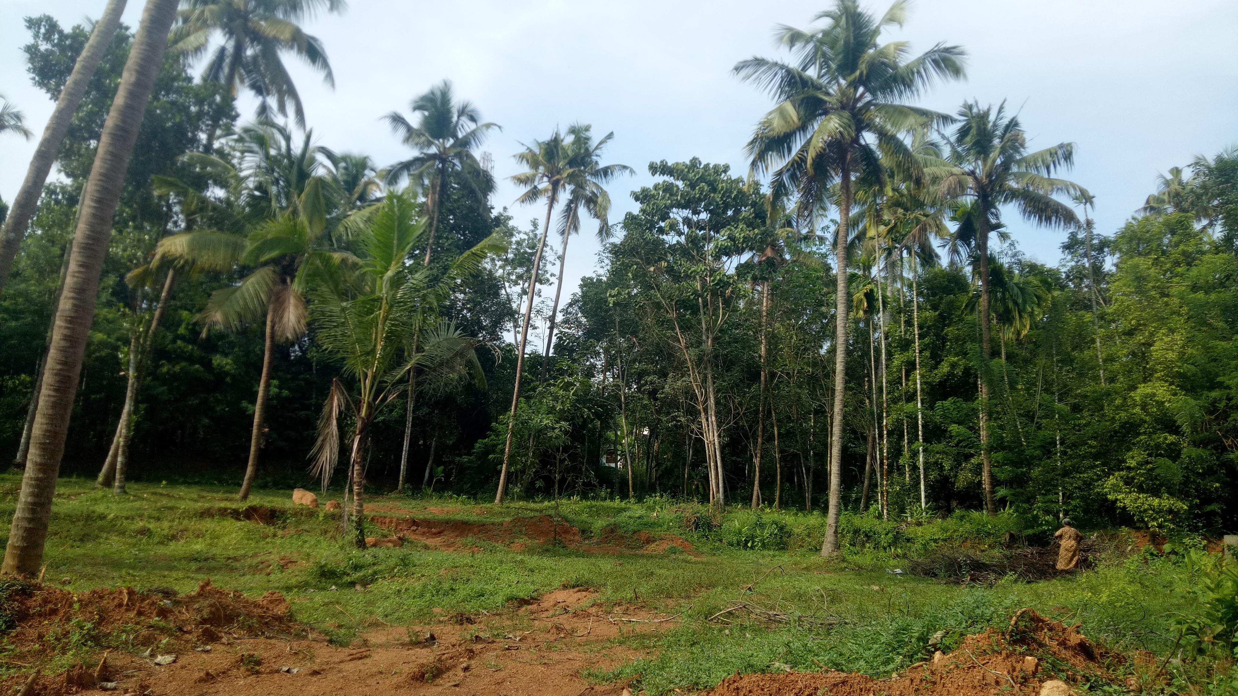 Plots For Sale At  Irinjalakuda